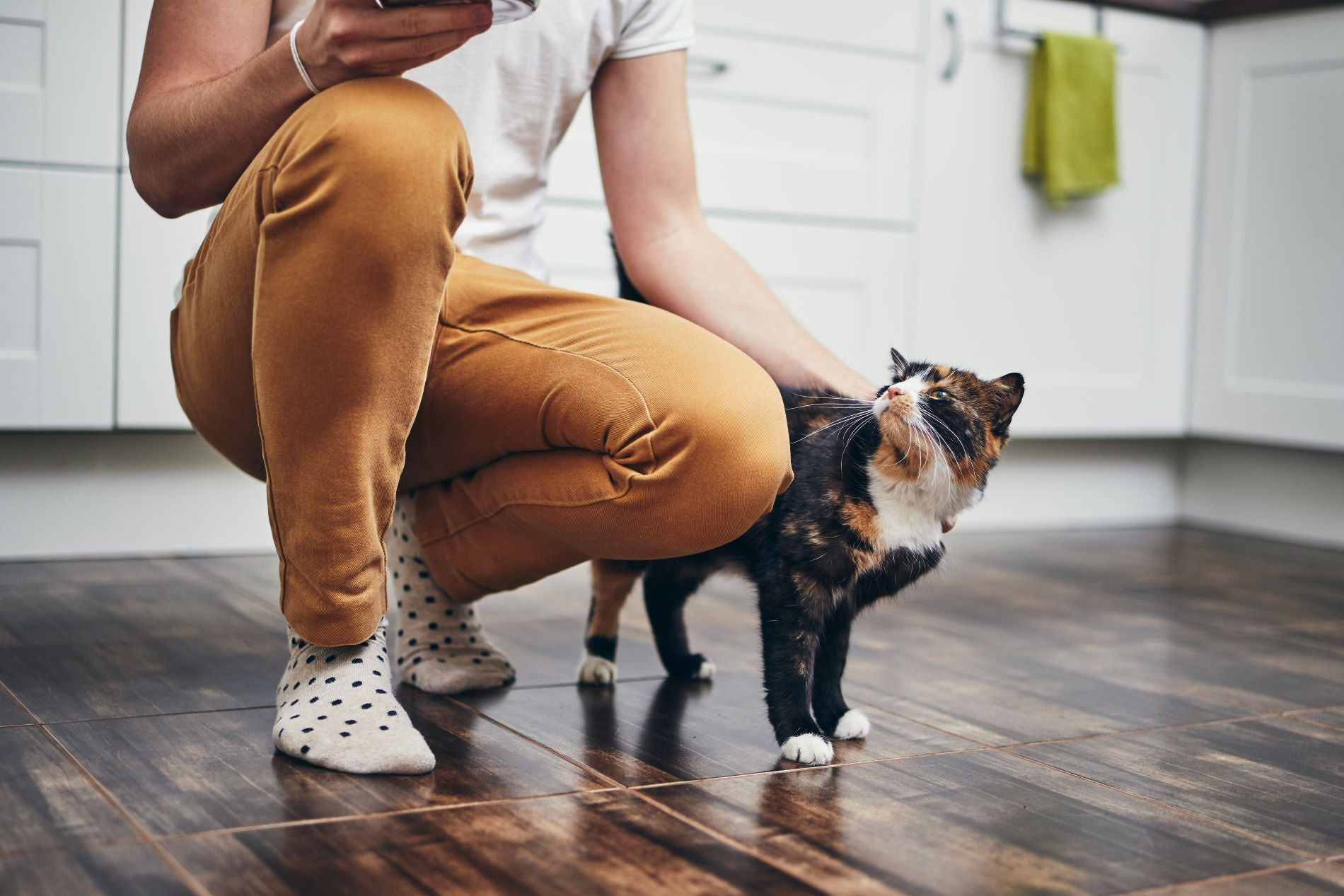 Why do cats get attached to one person
