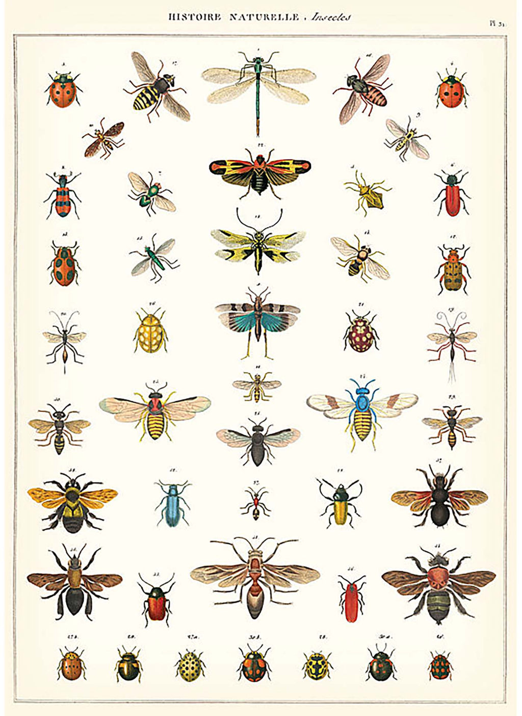National History of Insects Print