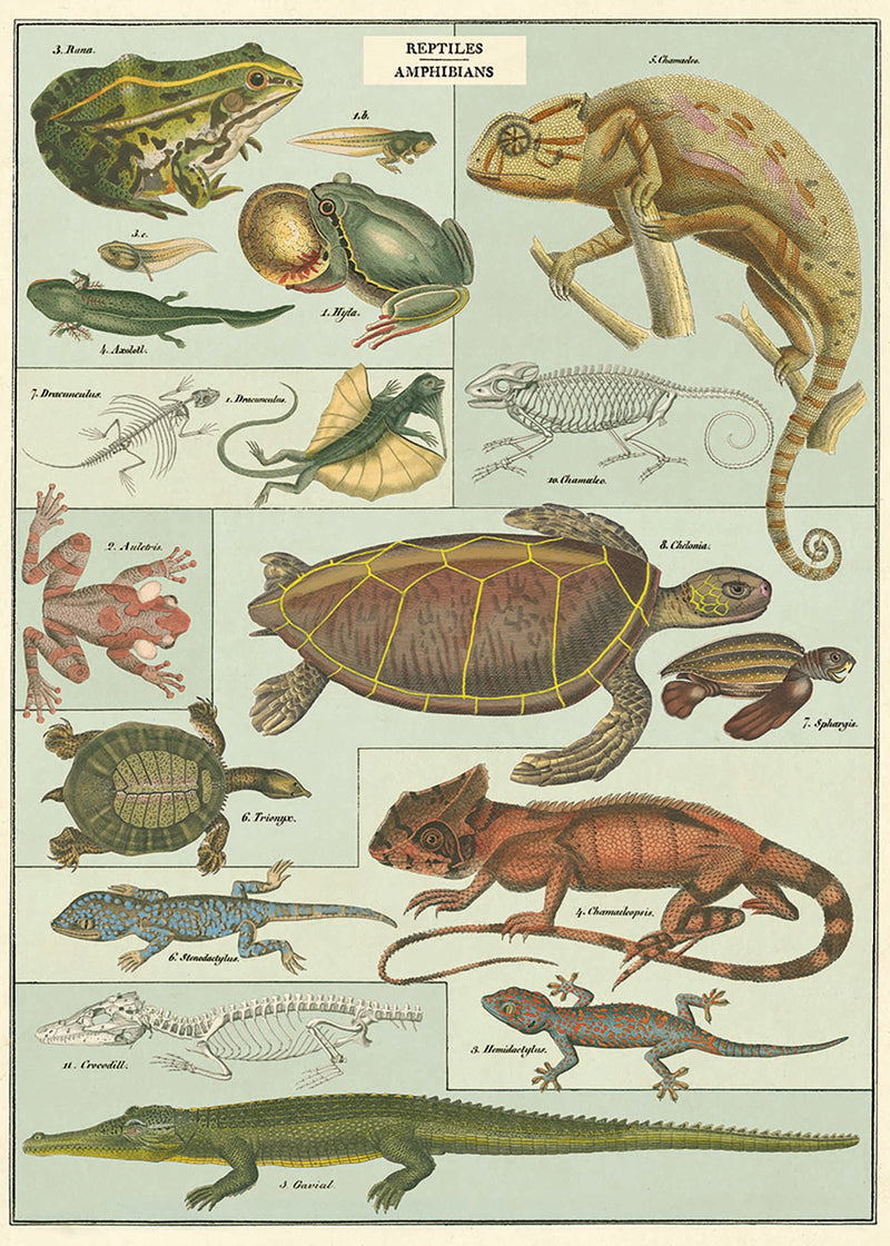 Reptile and Amphibians Print