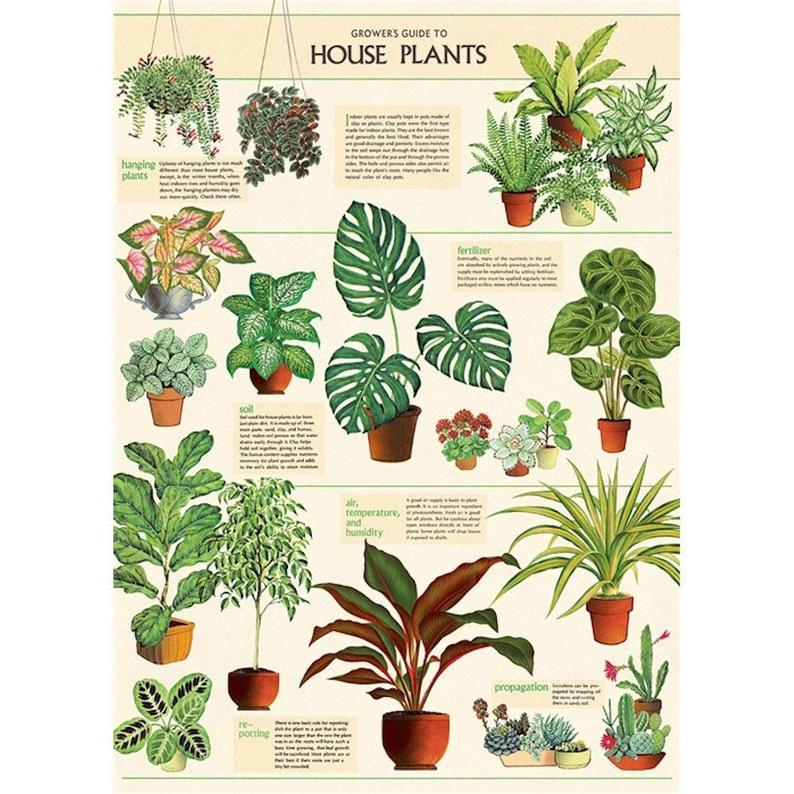 Houseplants Print