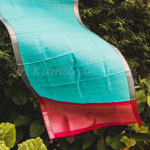 Blue Body With Pink Pallu