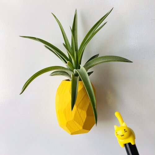 Pineapple Magnet + Live Air Plant