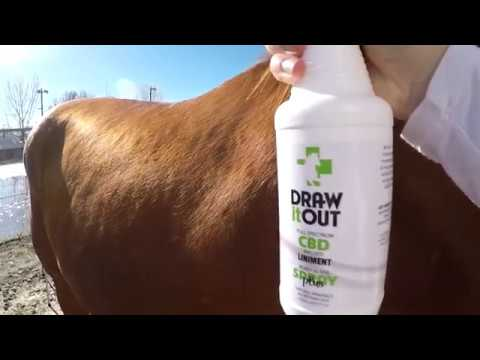 Draw It Out Liniment Gel - Veterinary Strength - Odorless and Colorless - Pain Relief Topical Analgesic Horse Cream for Joint and Muscle Pain - Natural Mineral with CBD