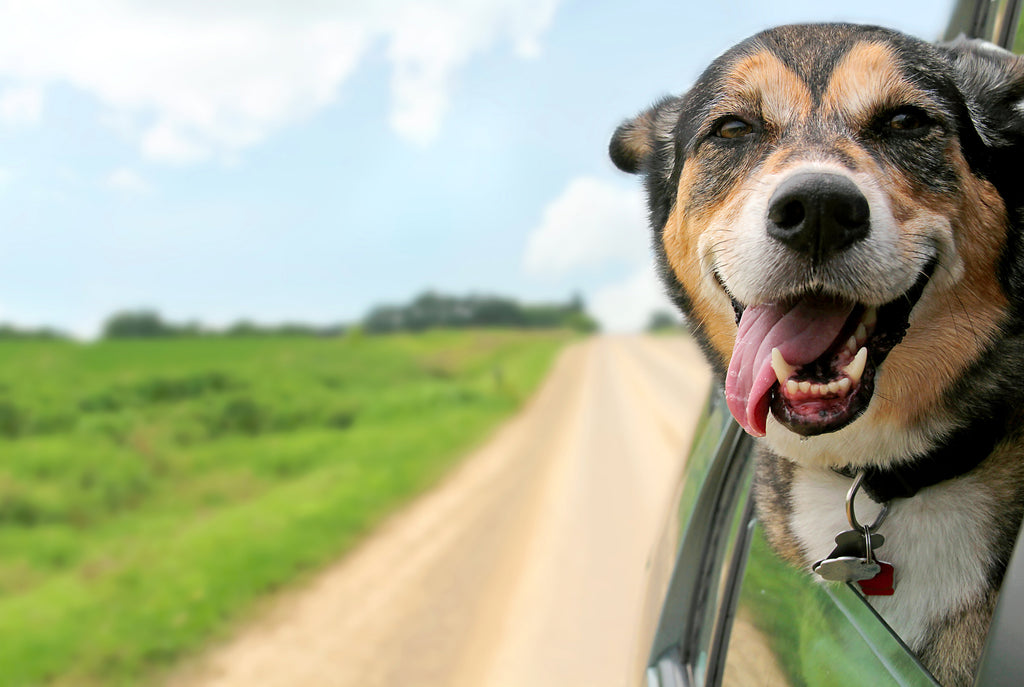 What You'll Need To Have A Successful And Safe Road Trip With Your Pet