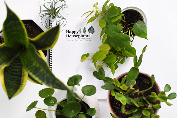 Happy Houseplants eBook