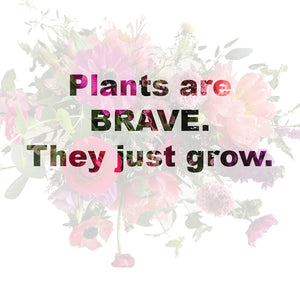 Plants are Brave.  They just grow.