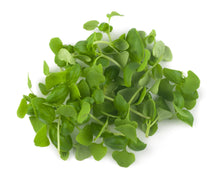 Load image into Gallery viewer, Micro Basil Sweet Genovese