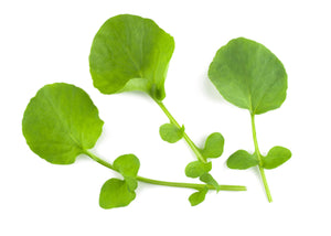 Micro Cress American or Land