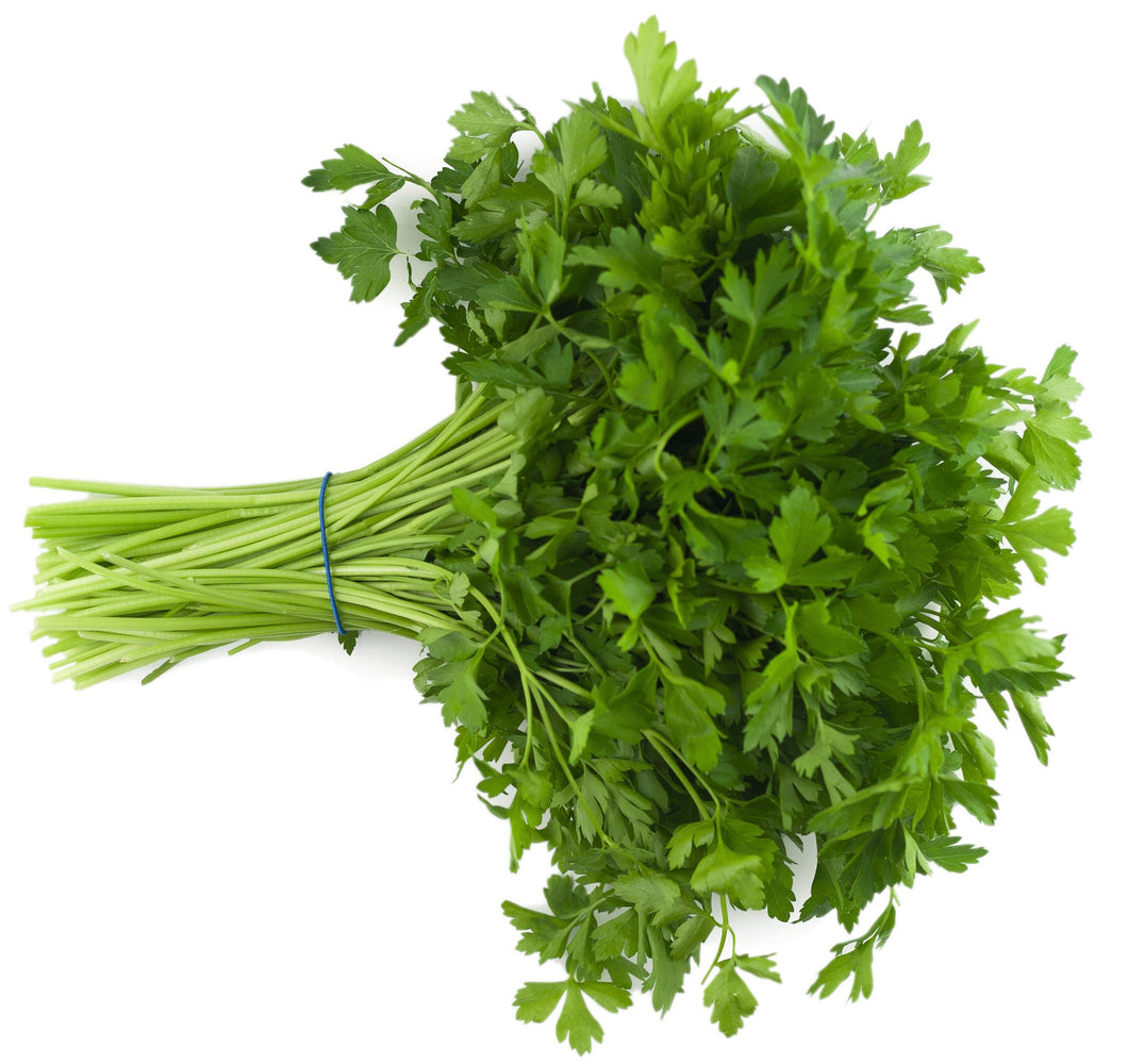 Parsley, Italian Giant CN 5606