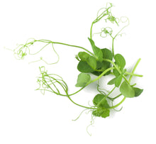 Load image into Gallery viewer, Micro Pea Shoots Style