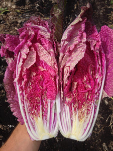 Chinese Cabbage, Scarvita F1