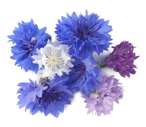 Micro Cornflower Polka Dot Mix