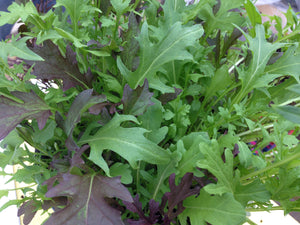 CN Salad Leaf Mix Frilly Leaf Blend