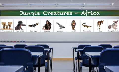 African elephants, baby bonobo, black eagle, chimpanzee, grey parrot, mandrill, Nile crocodile, Okapi, and Senegal bushbaby repositionable wall decals