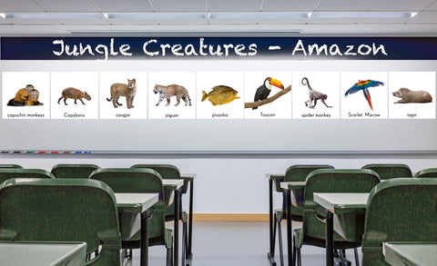 Capuchin monkey, Capybara, cougar, jaguar, piranha, Scarlet Macaw, spider monkey, tapir, toucan repositionable wall decals