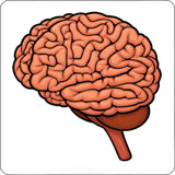 brain repositionable wall decal