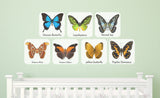 Attacus Atlas, Historis Odius, Lepidoptera, Papilio Demoeus, Ulysses Butterfly, Veined Jay, Yellow Butterfly repositionable wall decals