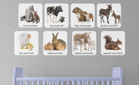 cat & kitten,cow and calf, dog & puppy, donkey & foal, hen & chick, rabbit and kits, sheep & lamb, squirrel & infant wall decals in child's room