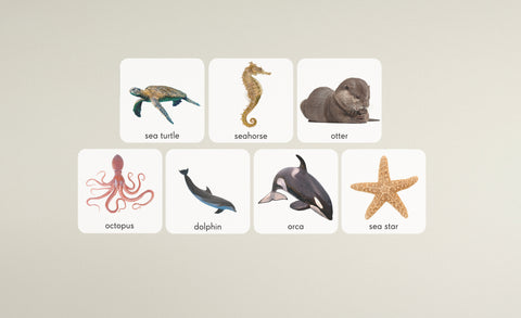 sea turtle, sea horse, otter, octopus, dolphin, orca and sea star repositionable wall decals