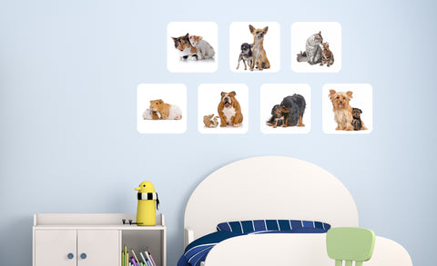 Calico cats, Chihuahuas, Maine Coon cats, Guinea Pigs, English Bulldogs, Yorkshire Terriers repositionable wall decals