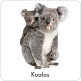 2 koalas repositionable wall decal