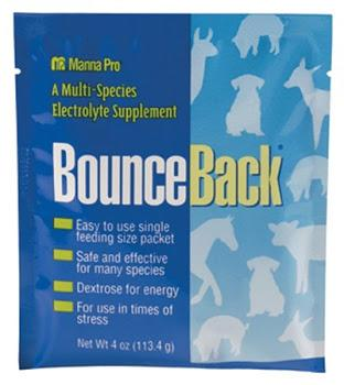 Electrolytes Bounce Back - 4oz