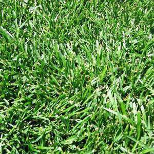 Certified DOT Tall Fescue 50#