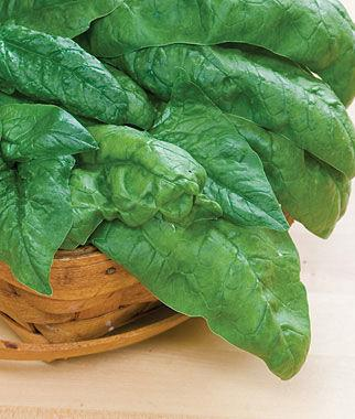 Bloomsdale Long Stand Spinach