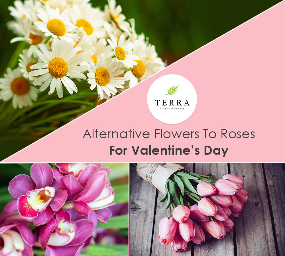 Alternative Flowers to Roses for Valentine's Day