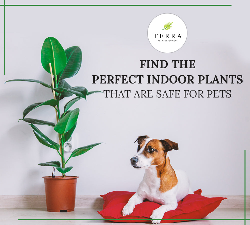 Indoor Pet-Friendly Plants to Adorn Your Ottawa Home