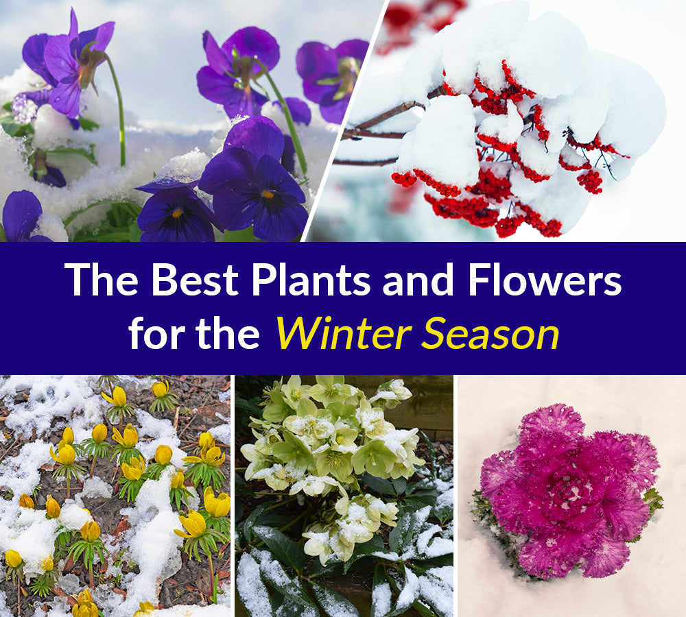The Best Plants and Flowers for the Winter Season