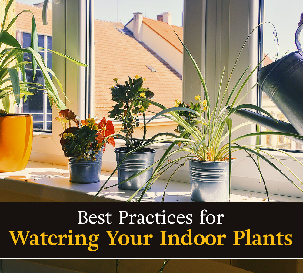 Best Practices for Watering Your Indoor Plants