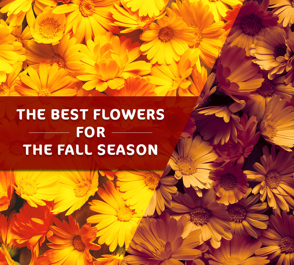 The Best Flowers for the Fall Season