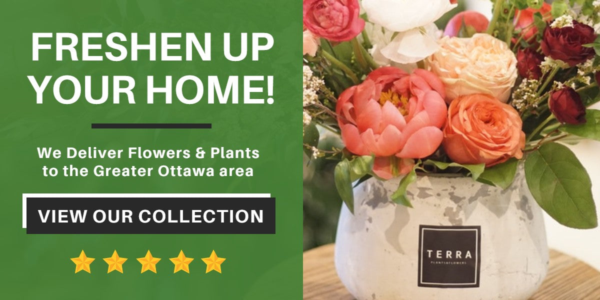 Freshen Up Your Home! | Terra Plants & Flowers