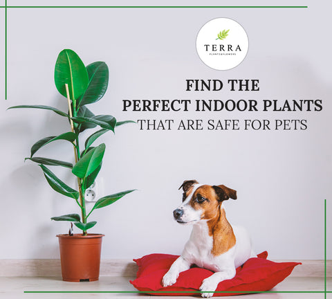 Indoor Pet-Friendly Plants for Your Home