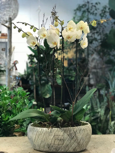 Contemporary Orchid Planter