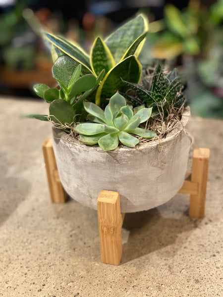 Succulent pot with stand