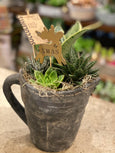 Christmas pitcher succulent