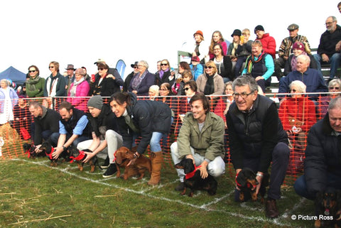 Campbell town show 2019 sausage dog races | Image @pictureross