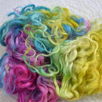 Tasmanian English Leicester Lamb Locks - Rainbow 13247| English Leicester Wool Tops | Sally Ridgway | Shop Wool, Felt and Fibre Online