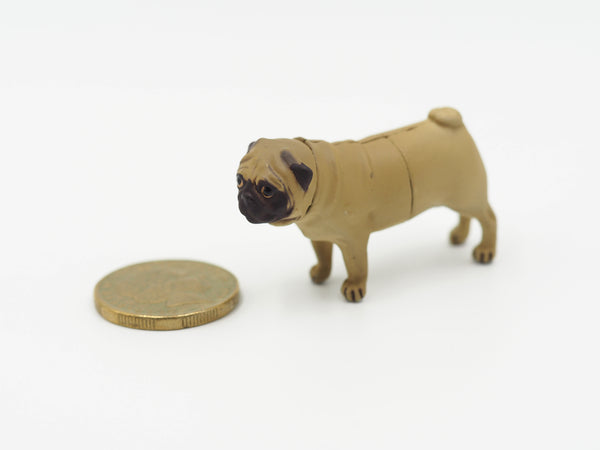 Miniature Brown Pug