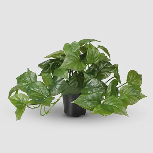 Philodendron Hanging Bush in Pot - Artifical