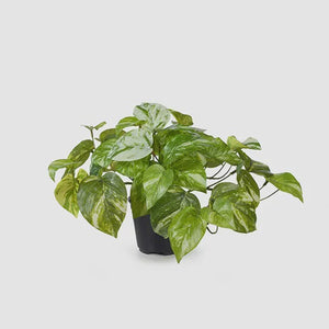 Pothos Marble - Artificial