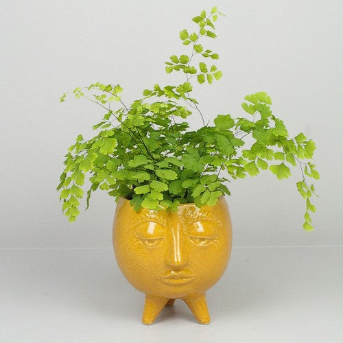 Cora Pot - Orange / Pale Green