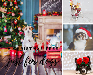 A Christmas Tree Just for Dogs
