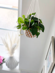 Bloom Hanging Basket Knitting Pattern