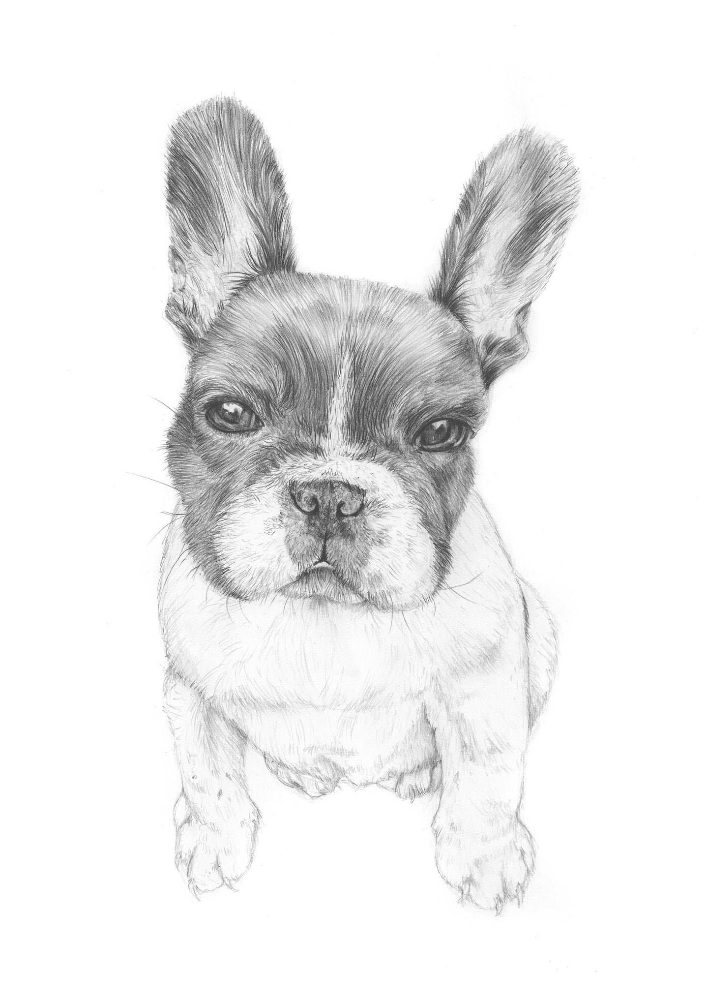 Detailed custom pet portrait in pencil (A4)