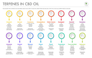 What Are Terpenes and How Do They Affect Your Body?
