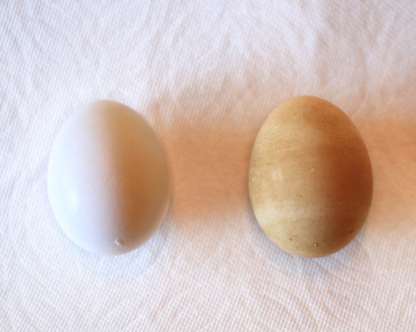 Coffee Dyed Easter Eggs © Coffee Gallery