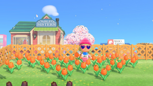 Animal Crossing Flower Crossbreeding